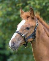 Foal Headcollar